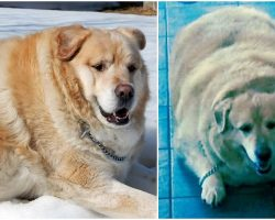 Obese Dog Saved From Euthanasia, Undergoes Astonishing Weight Loss Transformation