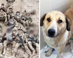 Soldiers In Afghanistan Go Above And Beyond To Bring Home A Stray They Fell In Love With