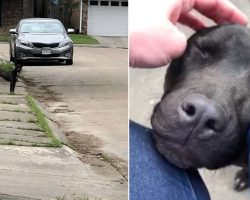 Stray puppy completely melts when she finally realizes she's safe