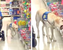 Hard-Working Service Dog Gets To Pick Out His Birthday Present, And It's Too Cute