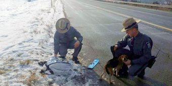 Truck Driver Sees Dogs Thrown From Window On Highway, Pulls Over To Save Them