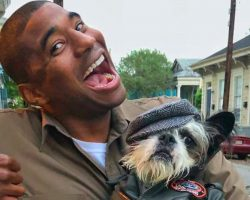 UPS Driver Made It His Goal To Take A Pic With Every Dog On His Route