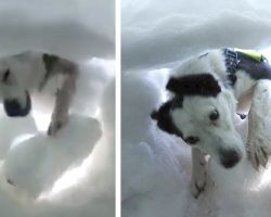 Man buried alive in the snow films the tearful moment a rescue dog digs him out