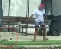 Horrified Motorist Recorded Woman Casually And Publicly Treating Her Dog Like Trash