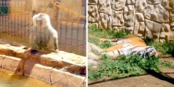 Zoo Closed After Complains Of Animal Neglect, The Animals Are Left Abandoned