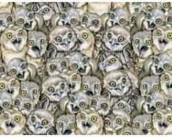 Look Closely – Can You Find The Cat Amongst The Owls?
