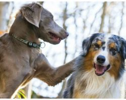 10 Fast Facts Before Adding A Second Dog To The Pack