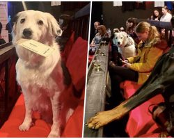 New Movie Theater Welcomes You To Bring Your Dogs And Drink Bottomless Wine