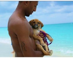 There's A Caribbean Island Filled With Adoptable Rescue Puppies… I'm Packing My Bags!