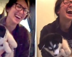 "Husky Puppy Suddenly Starts ""Talking"" Like A Human, And Mom Totally Loses It"