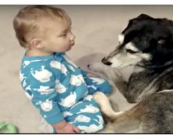 Baby Is So Sleepy But It's The Dog's Reaction That Makes Mom Grab The Camera