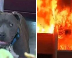House Burns To Ground With Baby Inside – Then Mom Sees Pit Bull Dragging Child Out By Her Diaper