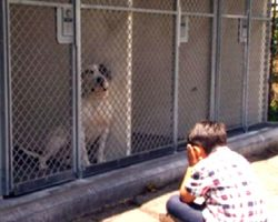 6-Year-Old Boy With Autism Doesn't Want Shelter Dogs To Feel Lonely, Begins Reading To Them