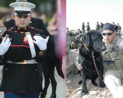 Bomb-Sniffing Dog Diagnosed With Terminal Cancer Gets Proper Send-Off Fit For A Marine