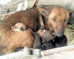 Woman Finds Street Dog Huddled With Puppies, Looks Closer And Spots A Tiny Hand Emerge