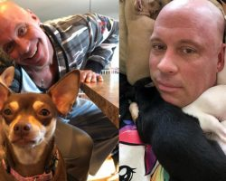 Chihuahua Saved Man's Life After Divorce— So, He Devoted His Life To Saving Other Little Dogs