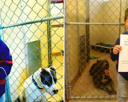 Little Boy's Act Of Kindness Inspiring Others To Pay It Forward To Shelter Dogs