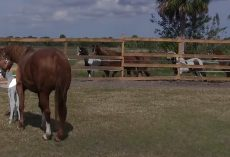 An entire herd rushed up to a Paddock to see the rarity a mother horse was hiding