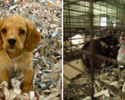 Pet Stores In California Now Restricted To Only Selling Rescue Cats And Dogs