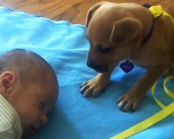 Abandoned Puppy Adorably Reacts To Baby Falling Asleep, And Mom Caught It All On Video