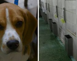 Callous CEOs Are Building A Facility To Breed Dogs To Abuse In Medical Testing