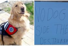 Restaurant Owner Refuses Service Dogs Entrance To His Restaurant And He's Getting Away With It
