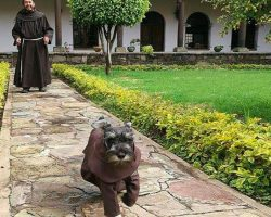 Monastery Adopts Stray Dog and Names Him 'Friar Mustache'
