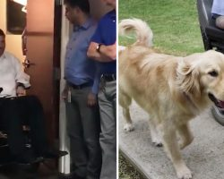 Man arrives to what he thinks is a meeting, gets a service dog instead