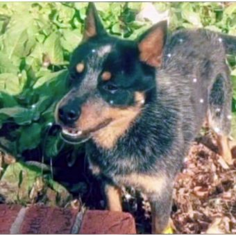 County Mistakenly Euthanizes Family's Dog – Offers Them Replacement Dog & $300