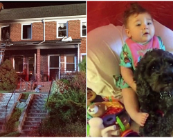 Baby and Dog Were Stuck In Burning House, Dog Sacrifices Himself To Save Her