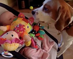 Guilty Dog Apologizes to Crying Baby After Taking Her Toy