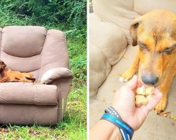 They Dump Him On Roadside & Drive Off, Obedient Pup Starves But Won't Leave Spot