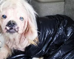 Dog discovered under horrifying conditions miraculously survives monstrous abuse