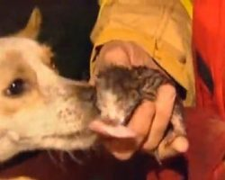 Four Kittens Are Trapped In A Fire, Family Dog Risks His Life To Save Them