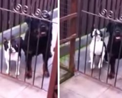 Dog Says 'Hello' Upon Being Greeted At The Gate