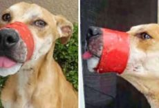 A Barbaric Monster Taped His Mouth Shut, But This Dog Managed To Find A Happy Ending