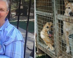 """Hero Woman Walks Into The Shelter And Asks For The Dog """"No One Else Wants"""""""