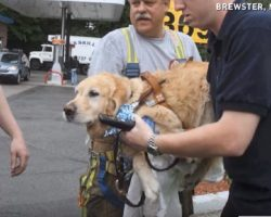 Emergency Responders Rush To Dog Who Hurdled In Front Of Bus To Save Blind Woman