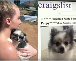 Man Sells His Girlfriend's Puppy On Craigslist While She's At Work, Then Dumps Her