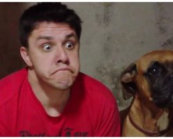 Man Imitates His Boxer's Expressions, Dog's Comeback Is Hysterical