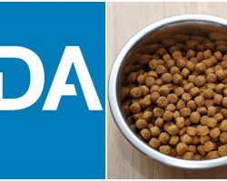 Breaking News: FDA Released Listing of Dog Food Brands Associated With Heart Disease (DCM)
