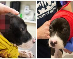 Thrown From A Car After With Mutilated Ears, 3-Month-Old Pup's Tail Wags Nonstop