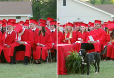 Grads Burst Out With Laughter As Dog Steals The Show During Ceremony