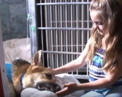 Hero Dog Leaps In Front Of Girl To Save Her Life And Is Bitten Three Times By A Rattlesnake
