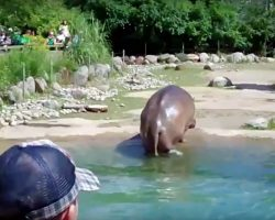 Hippo Unexpectedly Lets Out Massive Fart, Zoo-Goers Erupt In Hysterics