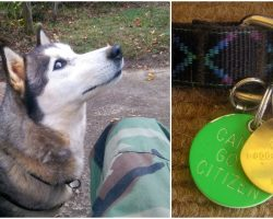 Man calls info on lost dog's tag to hear they weren't looking for her and didn't care