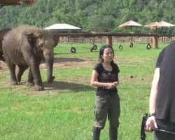 Woman's Giving An Interview When An Elephant Sneaks Up From Behind