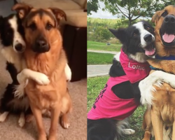 Lottie The Border Collie Can't Stop Hugging Her Best Friend
