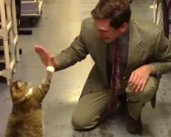 Animal Shelter's Low-Budget Commercial Turns Out To Be A Masterpiece