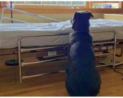 Heartbroken Dog Has No One, Waits Faithfully For Deceased Owner To Return Home